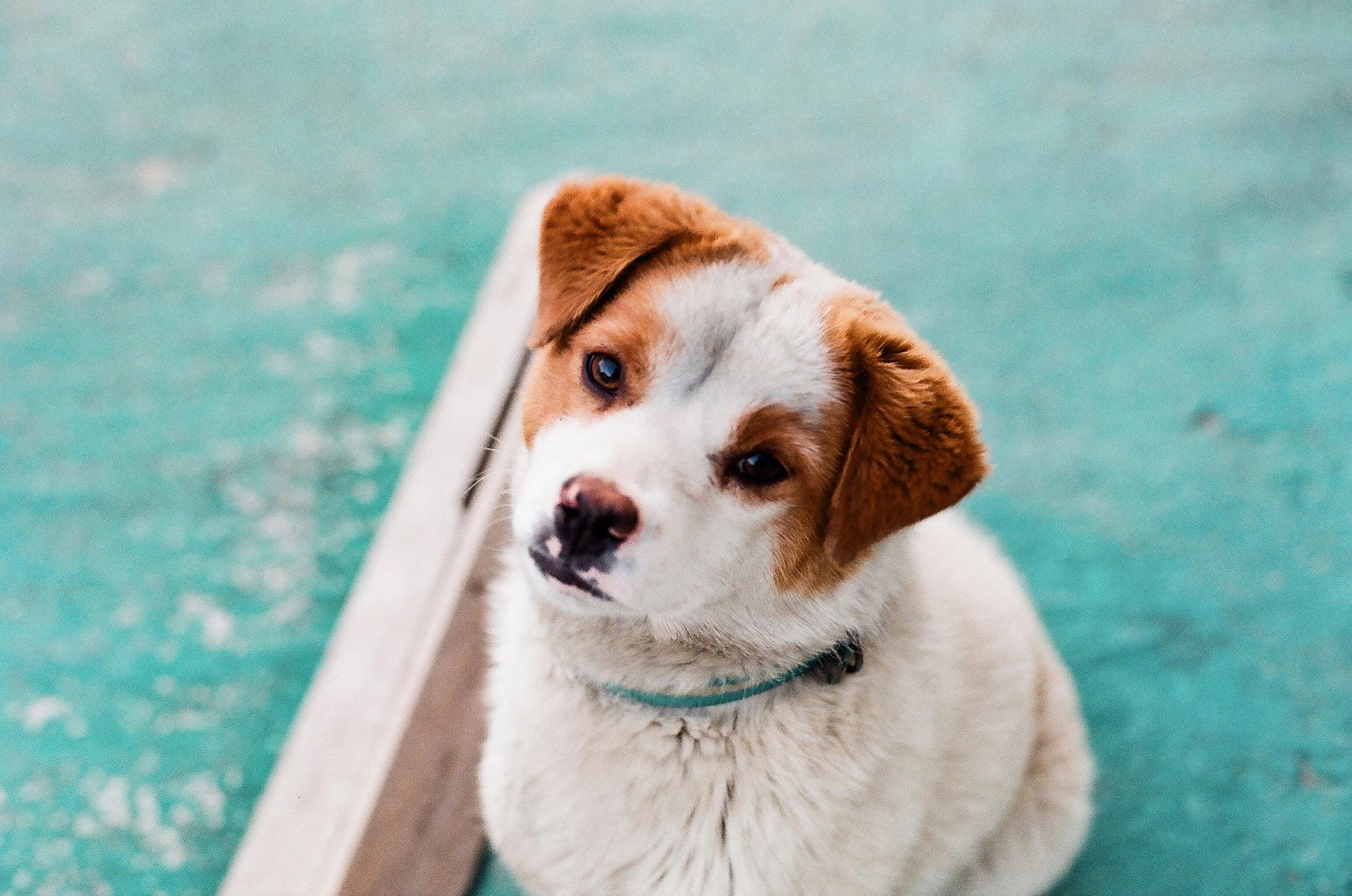 לא רק בגלל החוק: כל הסיבות לבצע חיסונים לכלבים